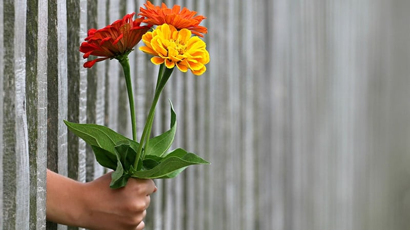 Kata-Kata Bijak Hidup Sederhana - Bunga Tiga Warna