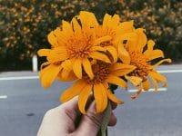 Kata-Kata Pantang Menyerah - Bunga Oranye