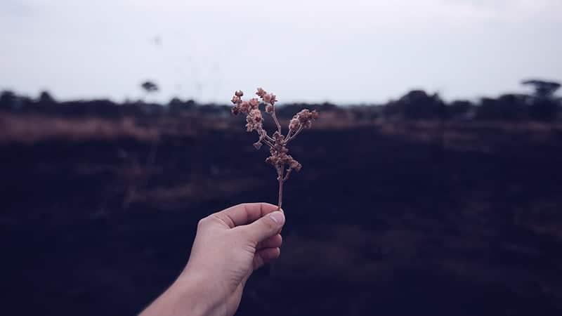 Kata-Kata Bijak Tere Liye - Bunga Kering