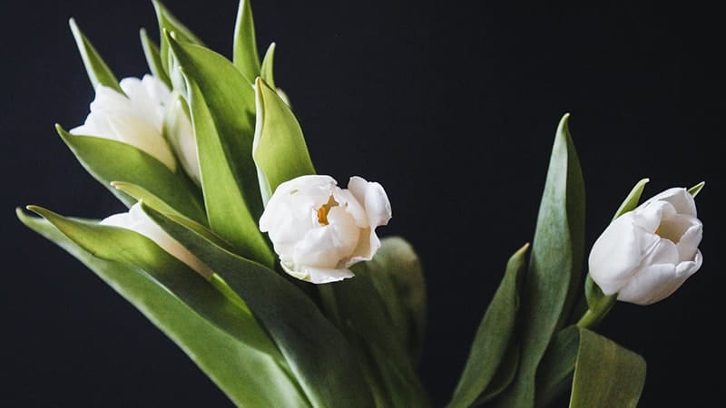 Kata-Kata Bijak Tere Liye Islami - Bunga Tulip Putih