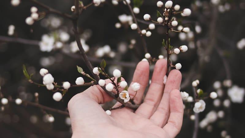 Kata-Kata Bijak Bahasa Inggris Singkat - Kuncup Bunga