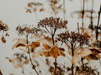 Kata-Kata Bijak Bahasa Jawa - Bunga Hampir Kering