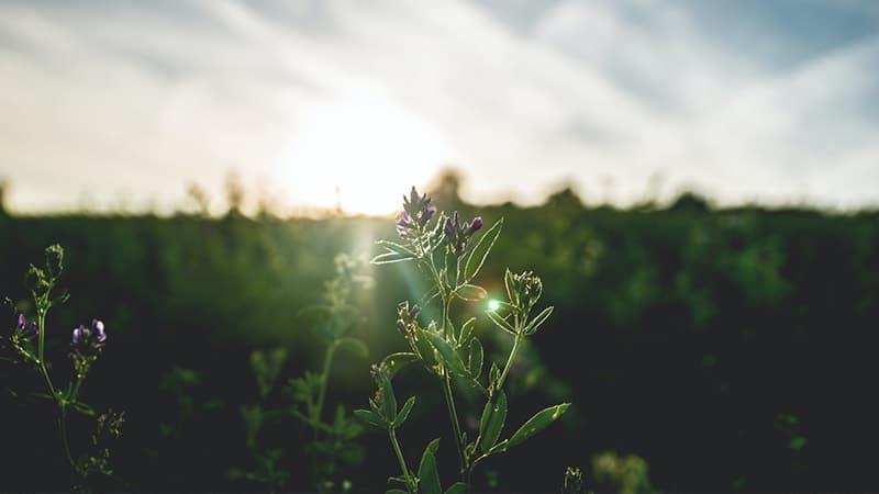 Kata-Kata Mutiara Semangat Hidup - Cahaya Pagi Hari