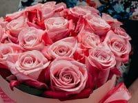 Kata-Kata Bunga Mawar - Mawar Pink