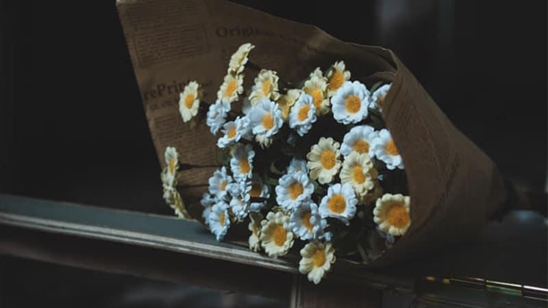 Bunga Krisa Tergeletak