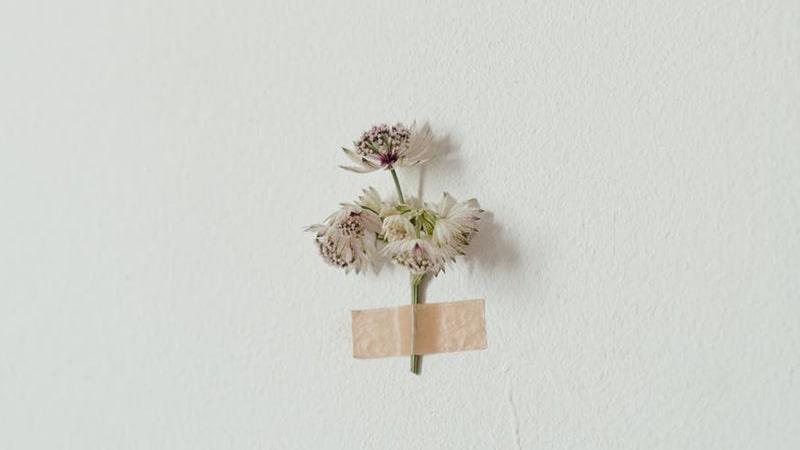 Bunga Kecil Layu