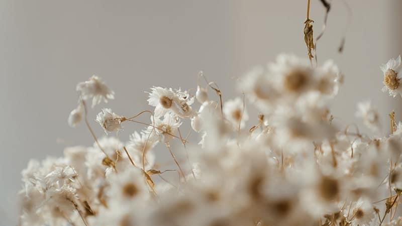 Kata-Kata Cinta Bahasa Inggris Sedih - Bunga Putih Layu Kering