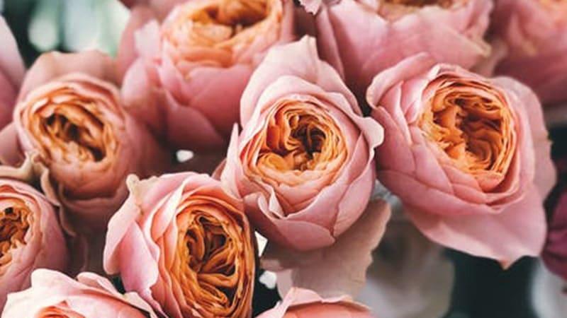 Bunga Mulai Layu