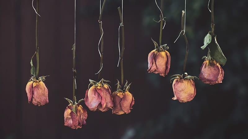 Kata-Kata Cinta Tak Direstui - Mawar Merah Kering