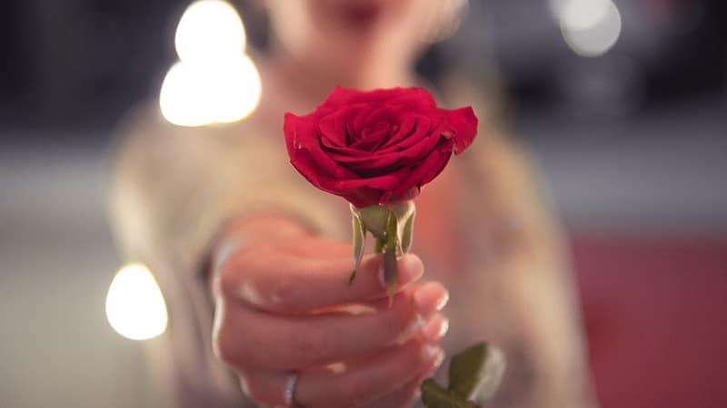 Kata-Kata Bahagia Bersamamu - Bunga Mawar