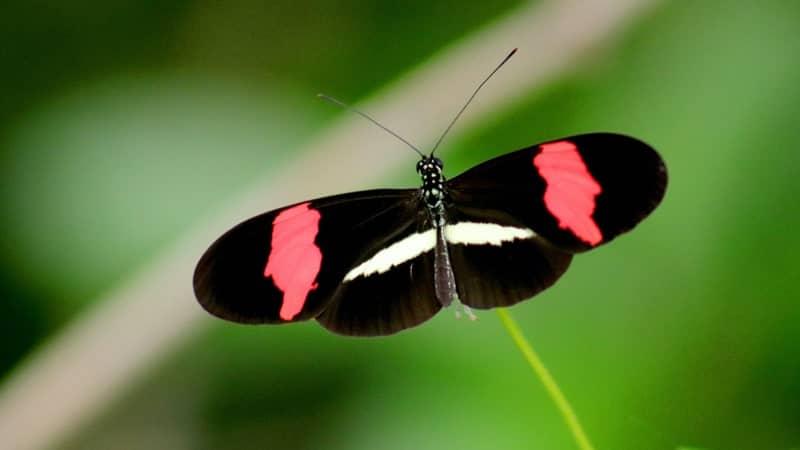 Kata-Kata Bahagia Bahasa Inggris - Butterfly
