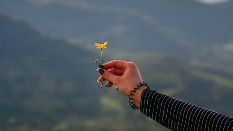 Kata-Kata Bijak Renungan untuk Wanita - Memegang Bunga Berwarna Kuning