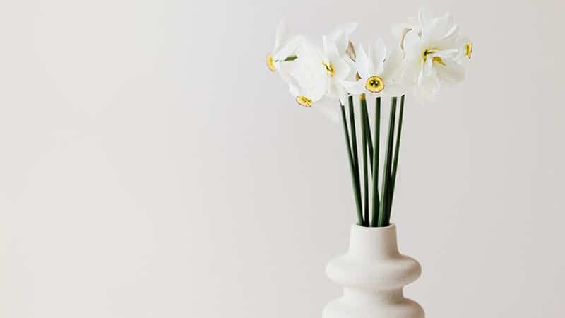 Kata-Kata Jomblo Mencari Cinta - Bunga Putih