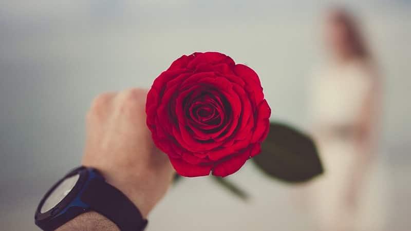 Kata-Kata Gombal buat Pacar Tersenyum - Bunga Mawar