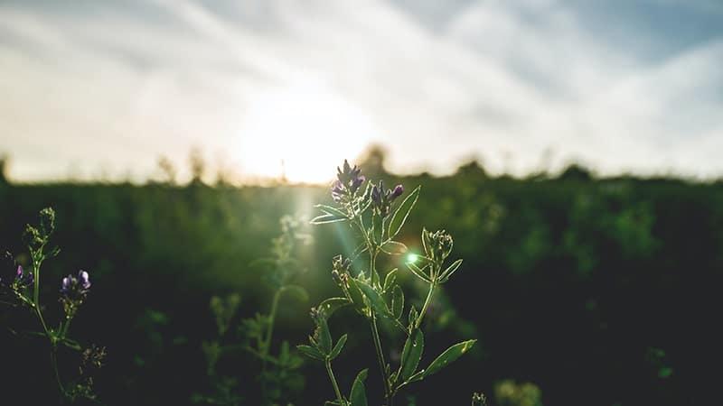 Kata-Kata Mutiara Bijak di Pagi Hari - Matahari di Balik Rumput