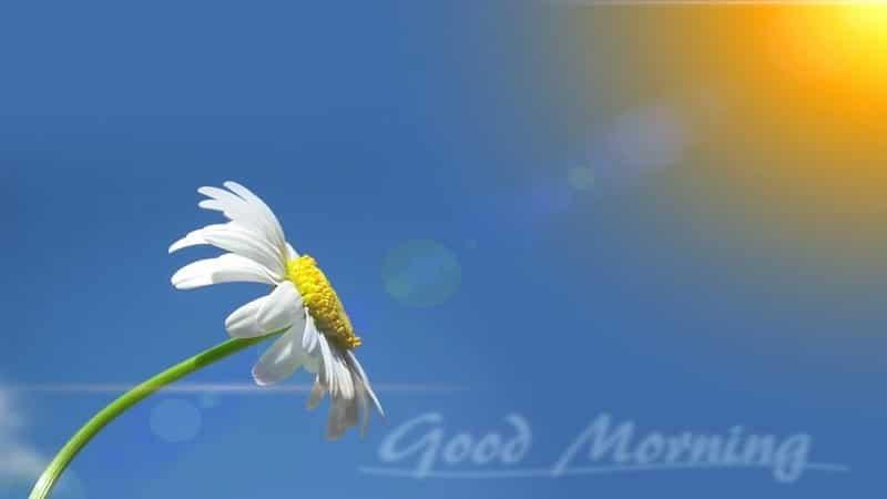 Kata Ucapan Selamat Pagi Lucu Kocak