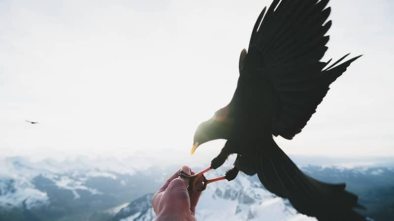 Memberi Makan Burung