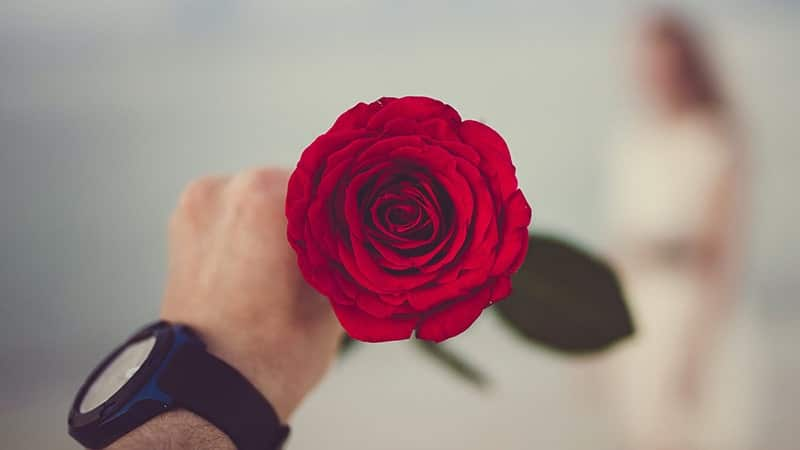 Ucapan Selamat Pagi Bahasa inggris untuk Orang Spesial - Bunga Mawar