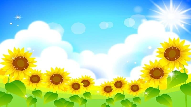 Met Pagi Islami - Bunga Matahari