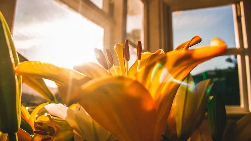 Bunga di Dekat Jendela