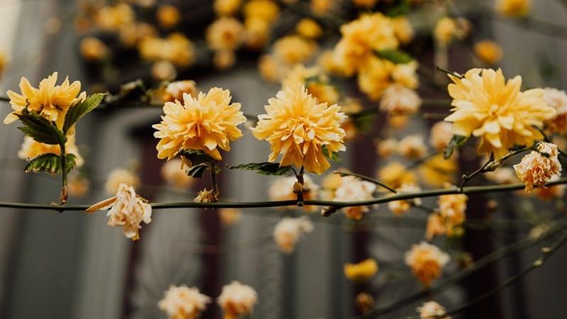Bunga Kuning Cantik Sekali