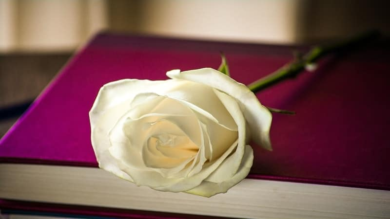 Quotes Romantis Bahasa Sunda - Buku dan Bunga