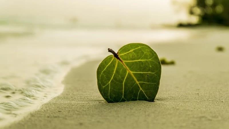 Kutipan tentang Pantai