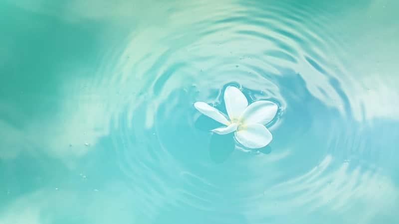 Kata-Kata tentang Air - Bunga di Kolam