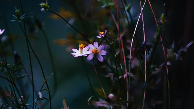 Kata Mutiara buat Mantan agar Dia Menyesal - Bunga Ungu