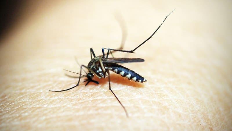 Kata-Kata Balikan sama Mantan - Nyamuk