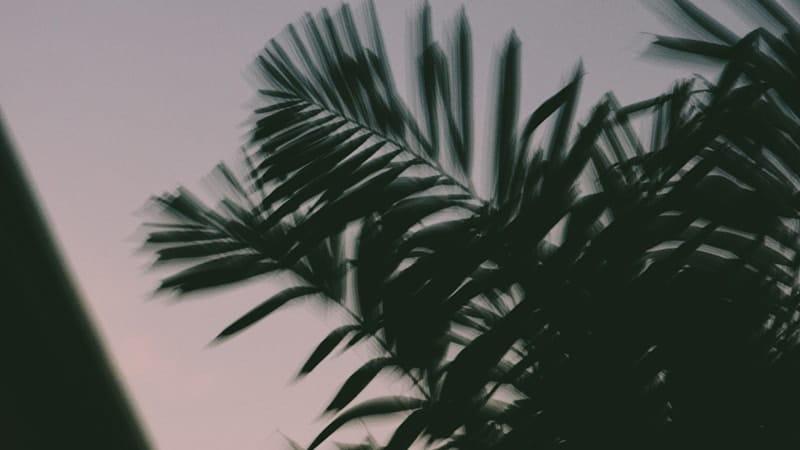 Daun Blur