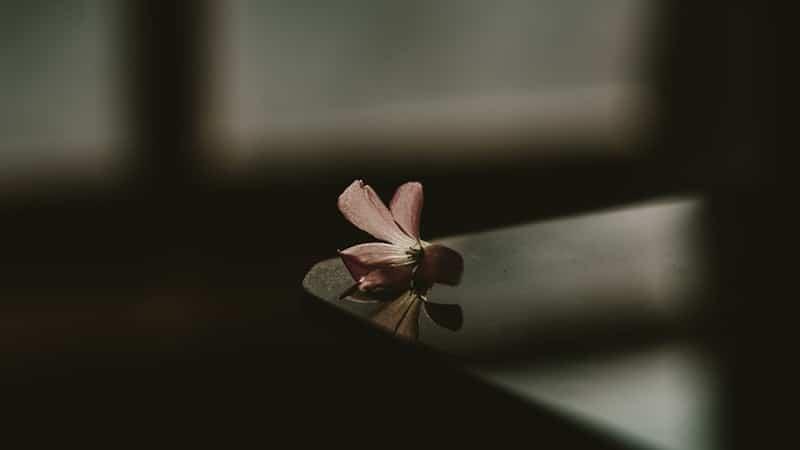 Bunga di Meja