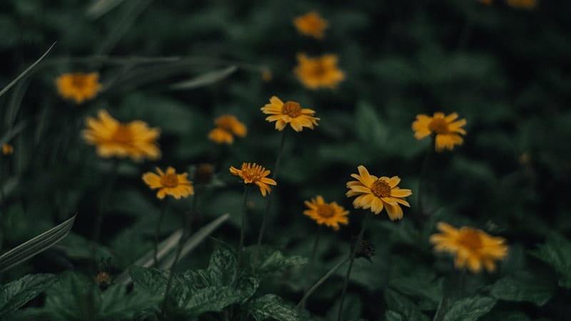 Kata-Kata Kecewa tentang Kehidupan - Bunga Kuning
