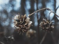 Kata-Kata Kecewa buat Pacar - Bunga Kering