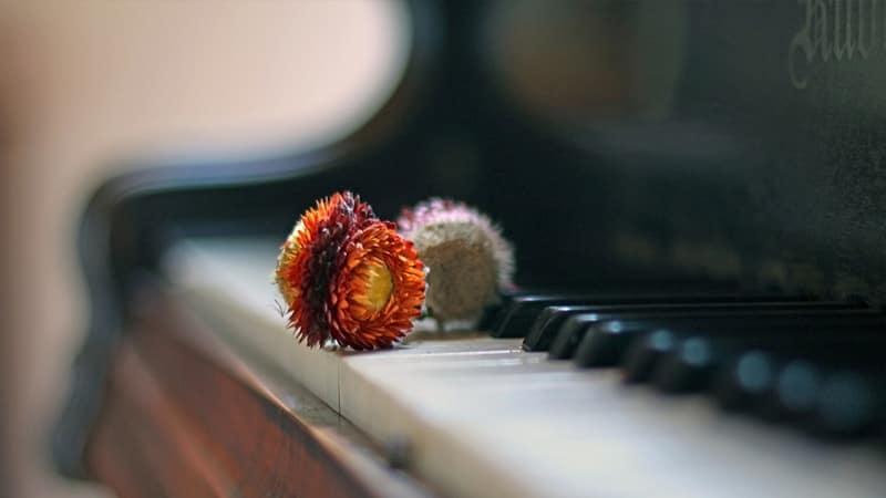 Kata-Kata Kecewa buat Pacar - Bunga di Piano