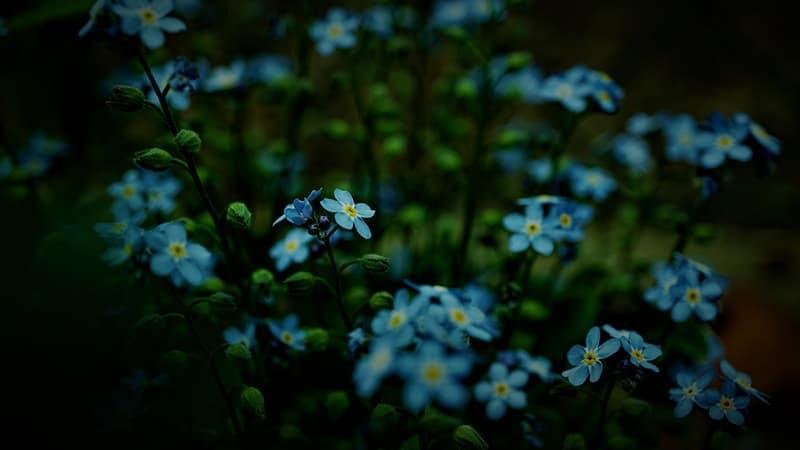 Kata-Kata Sakit Hati dan Kecewa - Bunga Biru