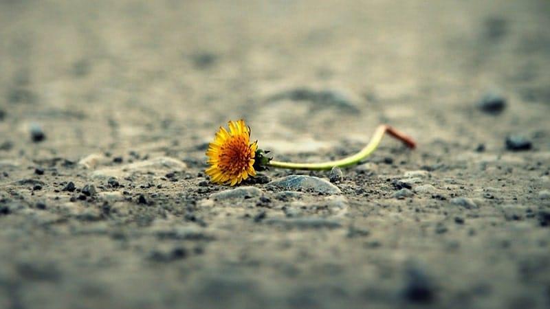 Bunga Kuning di Jalan