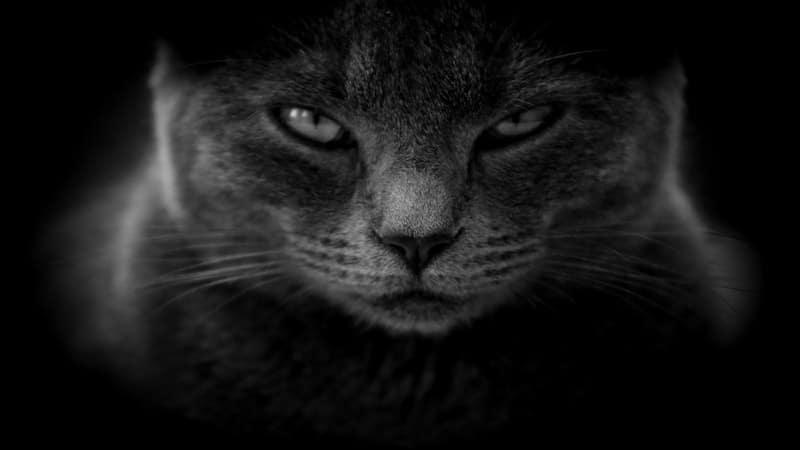 Kata-Kata Marah tapi Sopan - Kucing