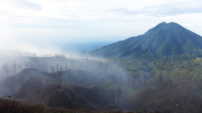 Hutan Ujung Jawa