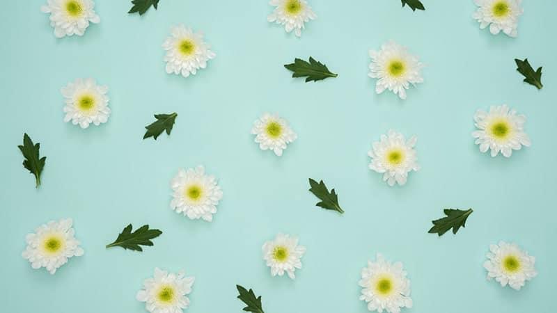 Caption Jawa Keren - Bunga dan Daun