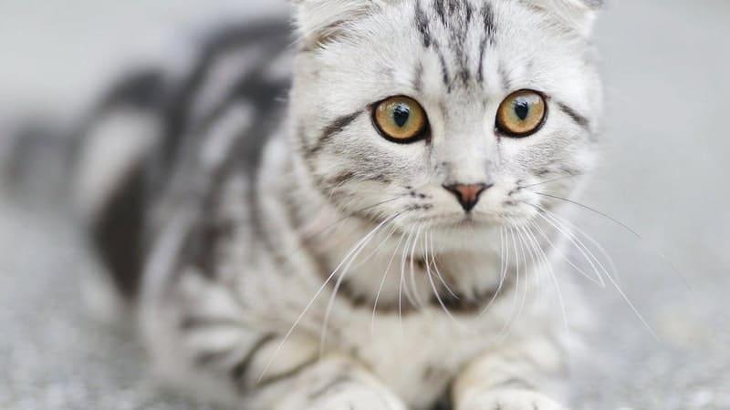 Kata Kata Bijak Bahasa Jepang - Kucing