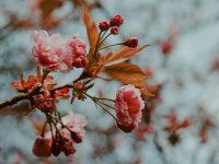 Kata-Kata Penguat Hati yang Rapuh - Bunga Cantik