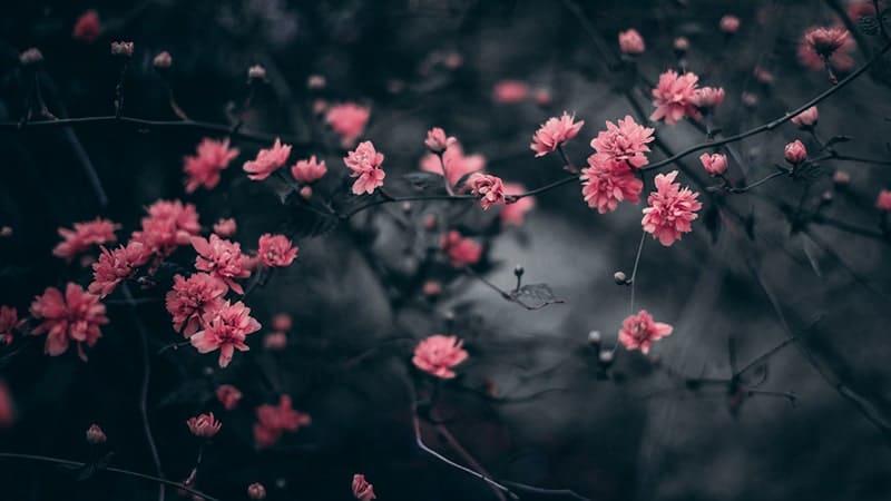 Kata-Kata Penguat Hati yang Rapuh - Bunga Pink