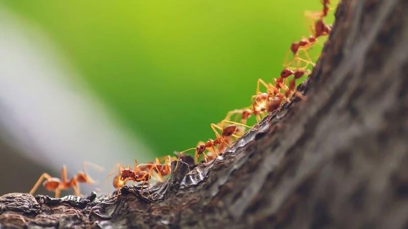 Cerita Nabi Sulaiman dan Semut - Kisah tentang Semut dan Nabi Sulaiman