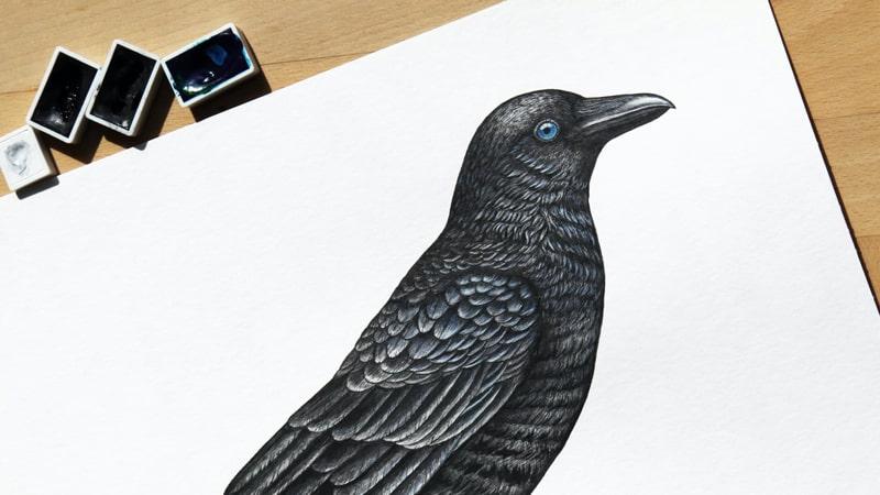 Dongeng Gagak Sang Pembohong - Sketsa Burung Gagak