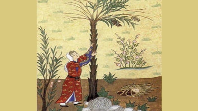 Kisah Maryam Ibu Nabi Isa - Mengandung dan Melahirkan Isa