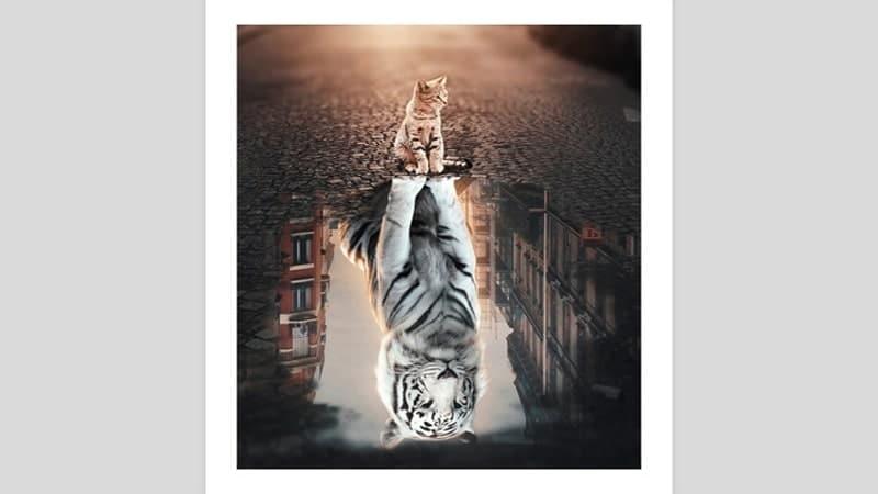 Dongeng Harimau dan Kucing - Kucing dan Macan