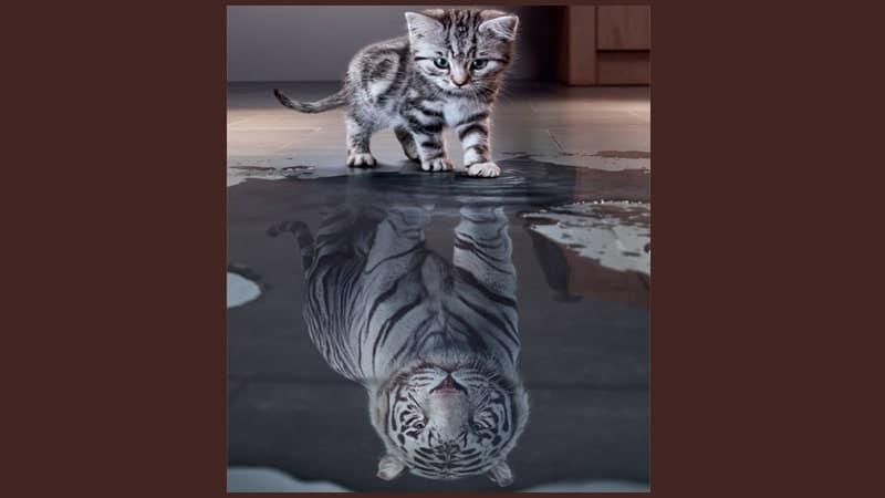 Cerita Fabel Harimau dan Kucing - Macan Kucing