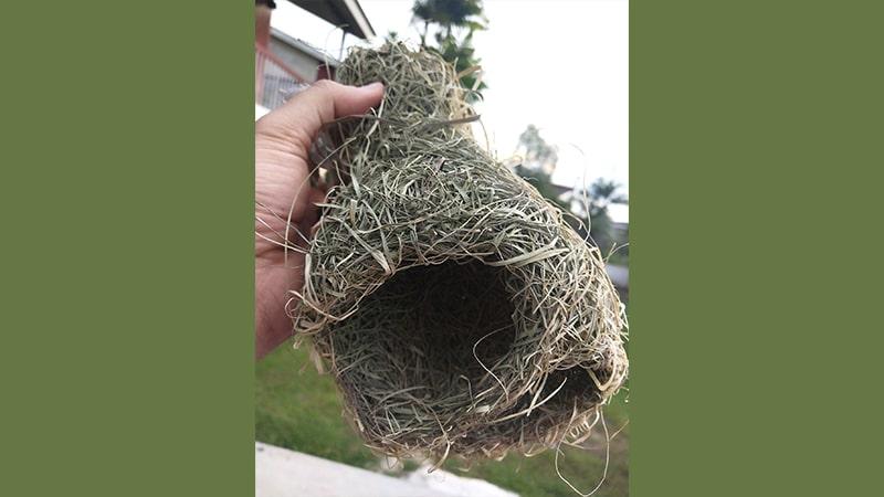Cerita Burung Tempua dan Burung Puyuh - Sarang Burung Tempua