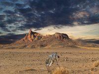 Cerita Burung Gagak dan Serigala - Ilustrasi Serigala dan Gagak